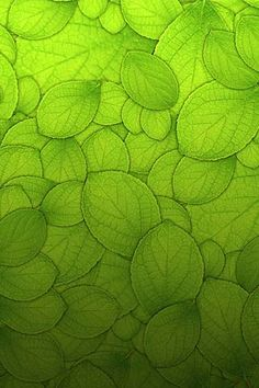Green Leaves ~ Nature Art Photography #healthtechclean
