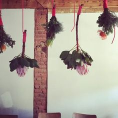 king proteas and pin cushions with fynbos suspended over kitchen tea table with bright pink rope (once again, venue is still a build site) 2018 Pin Cushions, Bright Pink, The Past, King, Tea, Kitchen, Table, Decor, Cooking