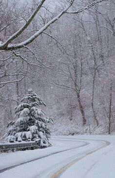 God's handiwork: Snowy road and woods