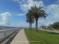 Be sure to take a bike ride along The World's Longest Sidewalk: Tampa's Bayshore Blvd next time you find yourself in the area. #biking #Tampa