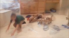 Puppies devour boyhttps://i.redd.it/a9q7ol9v7ocy.gif