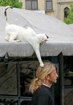 Sassy cat - I just ROTFL