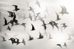   נσυяηεү σғ тнε sσυℓ  They say that one must beat one's wings against the storm in the belief that beyond this welter the sun shines. ~Virginia Woolf