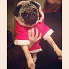 """""""I suppose it could be worse. At least it doesn't have a cheesy Christmas pattern on it. And I do look pretty amazing in it."""""""