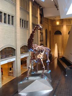 Futalognkosaurus, Royal Ontario Museum. Dinosauria, Saurischia, Sauropoda, Eusauropoda, Macronaria, Somphospondyli, Titanosauria. Auteur : Esv, 2012.