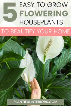 Looking for an easy way to beaufiy your home? Add any of these flowering houseplants to your home decor for instant beauty. We've also included basic plant care instructions so you can keep your flowering plants alive and healthy. The best part, these types of houseplants last much longer than regular cut flowers and are much more versitle. We've selected 5 easy to care for flowering houseplants so even if you don't have a green thumb you should do well with these types of houseplants. Plant Leaves, Flowers, Plant Care, Green Thumb, Low Light Plants, Houseplants, Types Of Houseplants, Plants, Planting Flowers