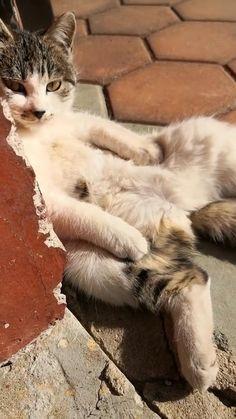 Funny Cute Cats, Cute Cat Gif, Cute Funny Animals, Kittens And Puppies, Cute Cats And Kittens, Kittens Cutest, Cute Animal Videos, Cute Animal Pictures, Sleepy Cat
