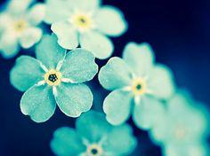 Favorite flowers!!!!