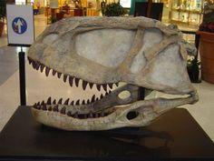 ABELISAURUS   Abelisaurus.jpg