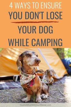 You're sitting around the campfire chatting with your friends when suddenly you realize your dog is missing. How can you keep your dog from running off at camp and getting lost? doing these things will almost guarantee it won't happen. Camping Glamping, Camping Hacks, American Alsatian, Dachshund Dog, Dachshunds, Lost In The Woods, Dog Travel, Hiking Tips, Ways To Travel
