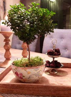 Myrsine, noe så yndig! – fleurs Bonsai, Planter Pots, Flowers, Bonsai Trees, Bonsai Plants, String Garden