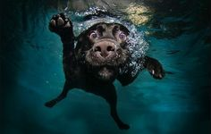 Dogs in Water  OMG, @Jacob Martin