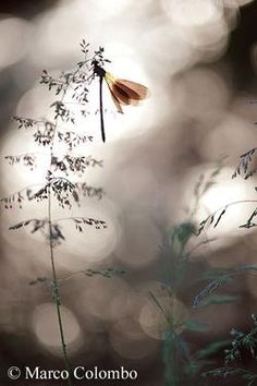 Invertebrates - Marco Colombo wildlife photographer