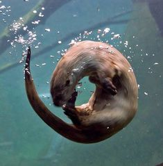 O is for otter!