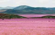 Atamaca desert, Chile.