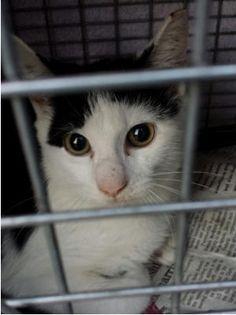 Blind Cat Rescue