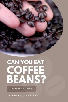 Doesn't the smell of fresh coffee beans want to make you eat them? Find out today whether you can gobble these tasty beans and whether they are beneficial for your health! #canyoueatcoffeebeans #coffeebeans #chocolatecoffeebeans #espressocoffeebeans Types Of Coffee Beans, Fresh Coffee Beans, Arabica Coffee Beans, Coffee Drink Recipes, Coffee Drinks, Starbucks Breakfast, Chocolate Covered Coffee Beans, Coffee Facts, Acquired Taste