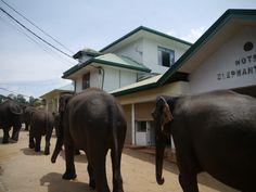 Pinnawala, O Orfanato dos Elefantes Sri Lanka, Elephant, Places, Elephants