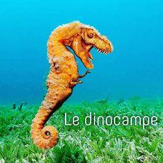 Suite des #animomix : le dinocampe !!! Alors ? #animalbuzzz adore !!!!