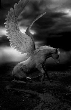 There is something so beautiful and so peaceful about a horse with wings.