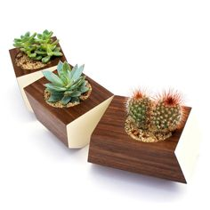 Pick your favorite succulent cuttings and display away in this handsome set of handmade planters. Carved from solid walnut with…