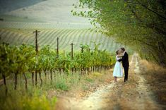 wineyard photos