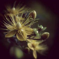 "Instagram의 TRANSFER VISIONS Flowers님: ""Presents . Featured Artist: @aqua_marine_777 Congratulations! ________________________________________ ▪ TRANSFER VISIONS Flowers…"""