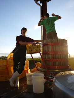 Rod McDonald wines boys press #VinAntics What Goes On, Wines, Harvest, Competition, Activities, Boys, Fun, Young Boys