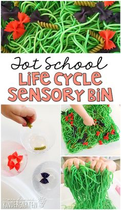 This life cycle sensory bin was lots of fun to explore. Perfect for a butterfly theme in tot school, preschool, or the kindergarten classroom. Lesson Plans For Toddlers, Preschool Lesson Plans, Preschool Themes, March Lesson Plans, Preschool Learning, Early Learning, Preschool Crafts, Hungry Caterpillar Activities, Butterfly Life Cycle