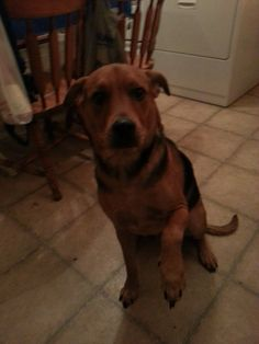 Emmet is a 2 yr old ...neutered male shepherd/golden mix. He's very good with children and gets along with other dogs and cats. He came from the south. He's skittish. He's afraid of doors and gates.thank you for any help you can give me. Please call...