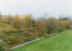 Overgrown terraces at Park Avenue as they looked in 1992, former home of Bradford Park Avenue. via @abwhite1952