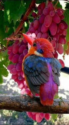 Magnificent colored kingfischer.