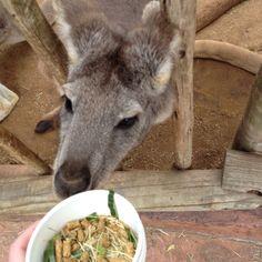 Feeding Kangaroos <3