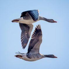 Deze foto is gemaakt door Wim Vooijs. Laat je verrassen en inspireren door zijn blog verBEELDing op boeksz.com