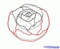 how to draw a peony, peony flower step 4