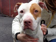 Belle is a beautiful two year old and she has been in the shelter for over a month now. Please share this beautiful and charming girl for a home today. https://www.facebook.com/photo.php?fbid=584511911561692=a.161896683823219.39456.152876678058553=1