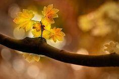 Photographic Print: In Autumn Art Print by Ursula Abresch : Warm Autumn, Autumn Leaves, Autumn Art, Bokeh Photography, Ethereal Photography, Autumn Photography, Artistic Photography, Fall Pictures, Fall Pics