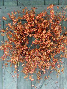 love the messy natural look and color of this Bittersweet wreath - love Bittersweet for fall!