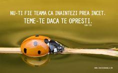 Romanian Language, Motivational Wallpaper, Sun Tzu, Wallpapers, Animals, Animais, Animales, Animaux, Wallpaper