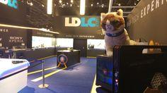 Grumpy LDLC dans le musée du futur sur le stand LDLC de la Paris Games Week
