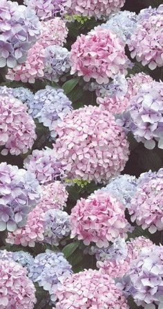 Pink and lilac Hydrangea flowers printed heavy by colorfulfelts