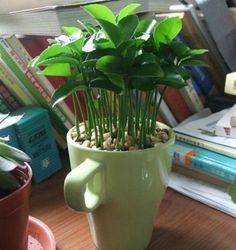 Plante sementes de limão e deixe a casa cheirosa