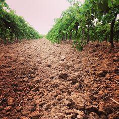 Checking out the #BarossaDirt   #Barossa #BarossaValley #vineyard  Image by @BarossaDirt on Instagram. copyright Barossa Grape & Wine Association