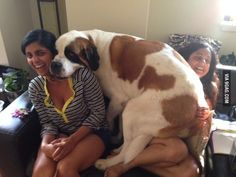 The dog who thinks he's the more important part of the picture: | 21 Dogs That Are Completely Mistaken About How Big They Are