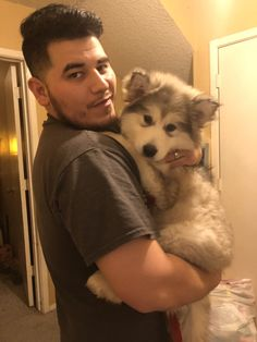 3 month old Alaskan Malamute named Zena Siberian Husky Facts, Siberian Husky Puppies, Husky Puppy, Malamute Puppies, Alaskan Malamute, Husky Dog Names, Cute Husky, Dogs For Sale, Dog Breeds