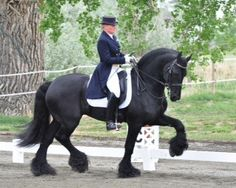 Fabe-12-year-old son wins Grand Prix