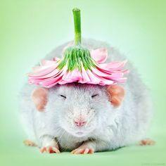 Herjan And His Fancy Hat (Herjan)