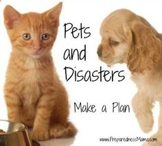 Day 28 - Pets and Disasters - 72 Hour Kits - Disaster Preparation - Preparedness Mama