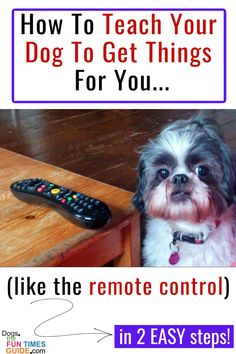 How To Teach Your Dog To Get Things For You - Your dog will bring you anything on command... if you teach them how to! I've done this with all of my dogs. They now bring me the remote control for the TV on command. (And no... they're very gentle and they don't scratch it with their teeth.) Here's how to teach your dog to find something or get something for you... in 2 easy steps!