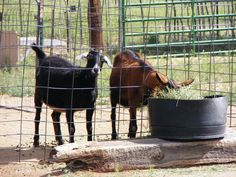 #goatvet says this home-canning website has some good basic advice about keeping goats